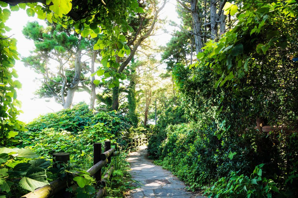 Jeju Olle walking path through green forest and efeu at a sunny day