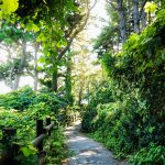 Jeju Olle walking path through green forest and efeu at a sunny day, Jeju Island, South Korea