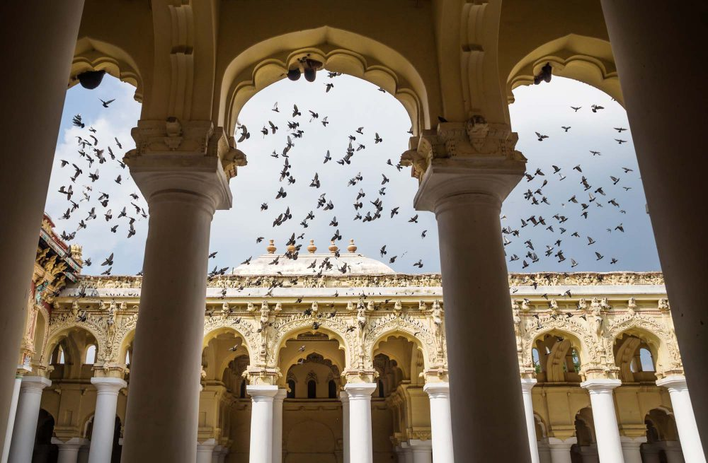 Hundreds of doves flying in the palace of Madurai seen through four pillars with view on decorated pillar hallway, Madurai, India